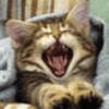 8196515 cat yellow 1602989248