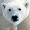 1059098 polarbear1993 1578939314