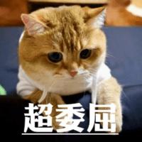 1395295 qingjiaqi 1597050693